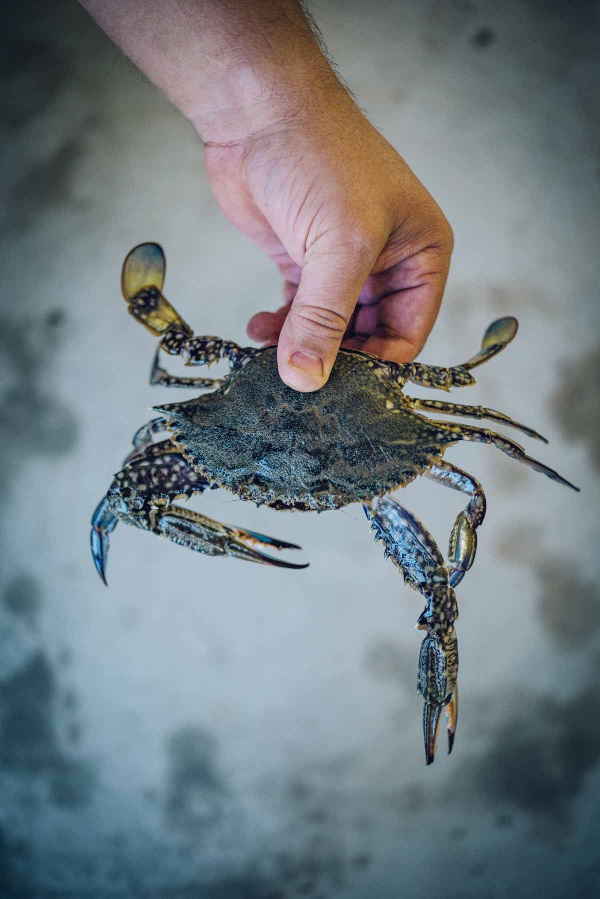Blue Swimmer Crabs | Chew Town Food Blog